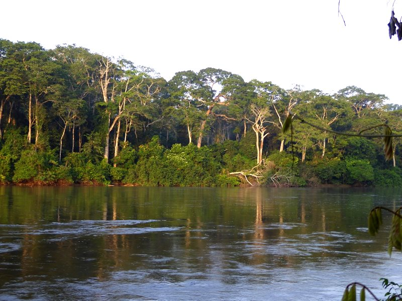 The magnificent 'gallery forest' along the river Boumba, ancient home of the Baka people. Photo: Baka Beyond.
