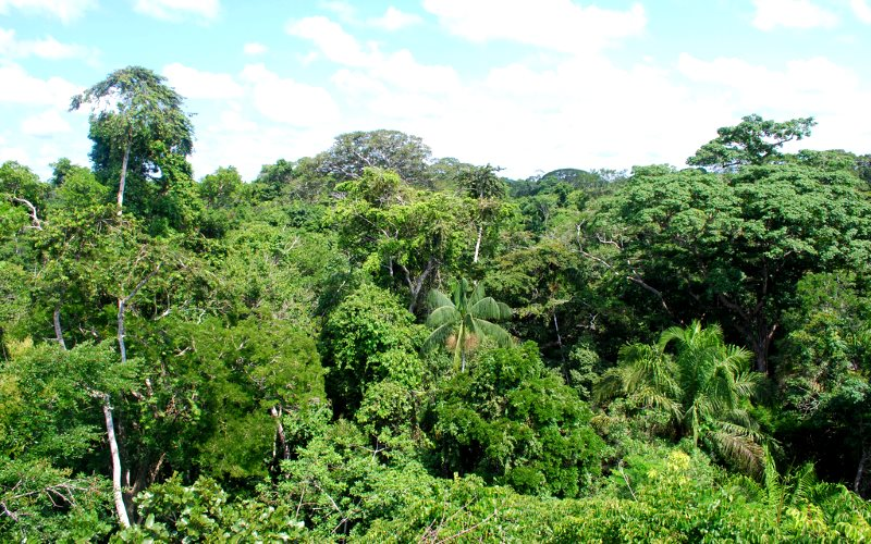 Amazon rainforest near Puerto Maldonado, Peru, along the likely route of the proposed Brazil-Peru railway. Photo: Ivan Mlinaric via Flickr (CC BY).