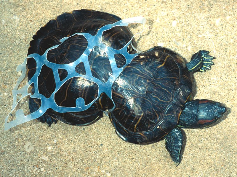 Plastic in the oceans can seriously damage sea life. Photo: Stefan Leijon via Flickr (CC BY-ND).