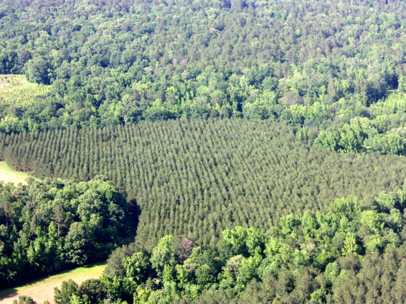 Various stands of forest of five ages demonstrating sustainable management. Photo: Drax Group.