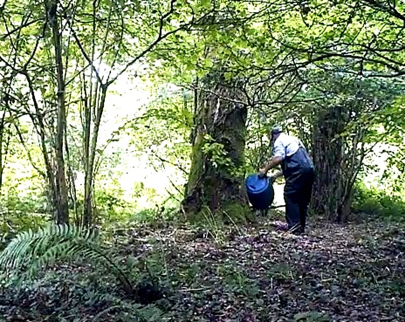 Man dumping offal under a tree, apparently to attract foxes into the area. Photo: League Against Cruel Sports.