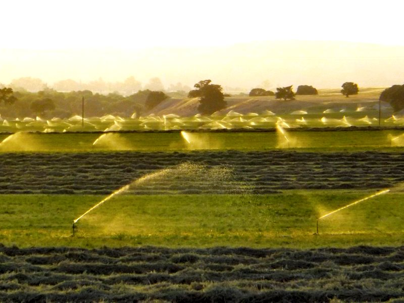 Alfalfa fields under irrigation near San Miguel on Indian Valley Road, Central California. Photo: Ken Figlioli via Flickr (CC BY-SA).