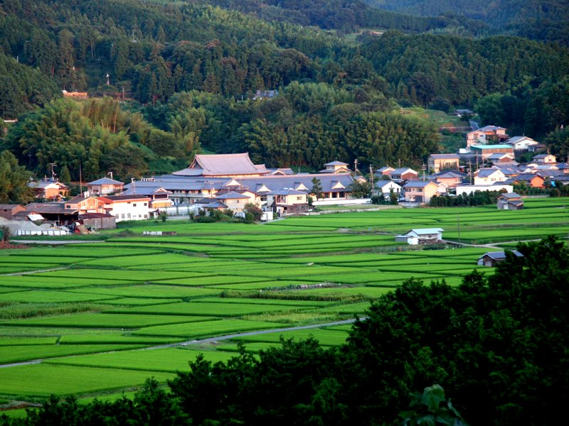Rice paddies before sunset in Asuka, Japan. Photo: Roger Walch via Flickr (CC BY-NC-ND).