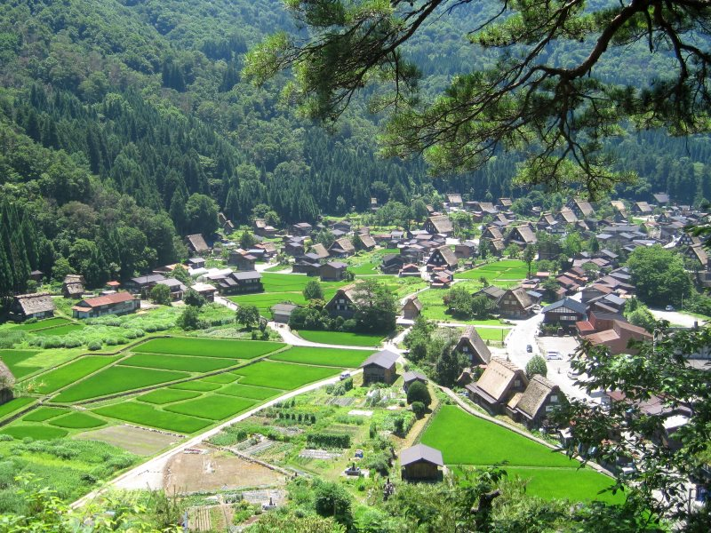 Village rice fields, Hida Shirakawa-go, Gifu-ken, Japan, July 2010. Photo: Joel Abroad via Flickr (CC BY-NC-SA).
