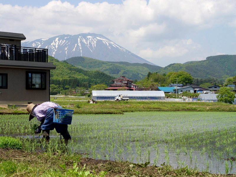 After the rice is planted by tractor, more rice is put in spaces by hand. Photo: Shigemi.J via Flickr (CC BY-NC-ND).