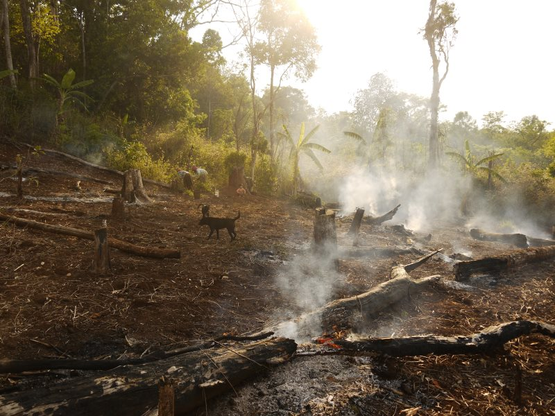 Slash-and-burn farming encroaching into Seima Protected Area. Photo: William F. Laurance.