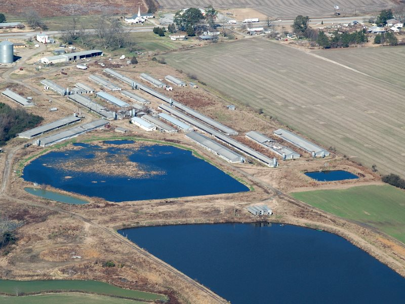 Right next to a low income black community in North Carolina, a huge industrial hog farm. Hog feces and urine are flushed into open, unlined pits and then sprayed onto nearby fields, leading to the waste drifting as 'mist' onto neighboring properties. Pho
