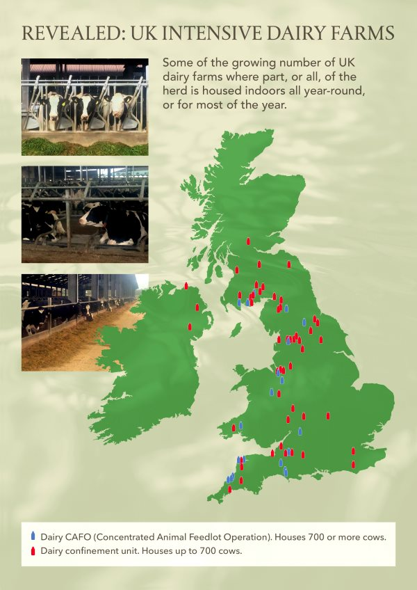 Map showing large (> 700 cow) intensive dairy operations across the UK. Image: Andrew Wasley / Ecostorm.