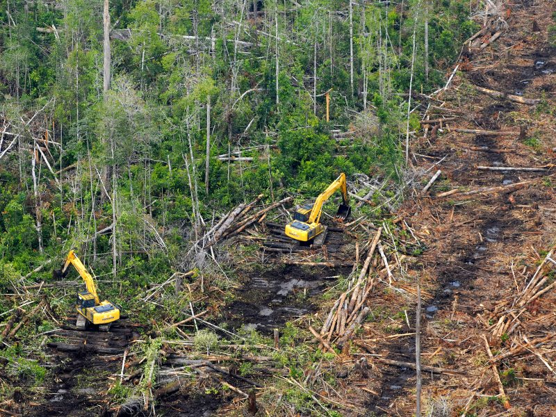 Heavy machines channel and drain peat forest in western Indonesian Borneo. Photo: Edy Pumomo / Greenpeace.