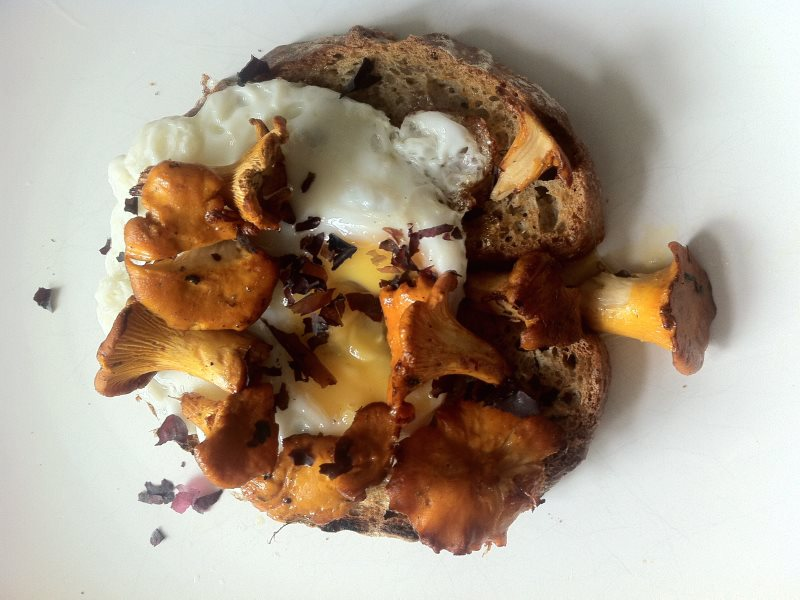 Chanterelles on sourdough with a sprinkling of dulse. Photo: Fiona Bird.
