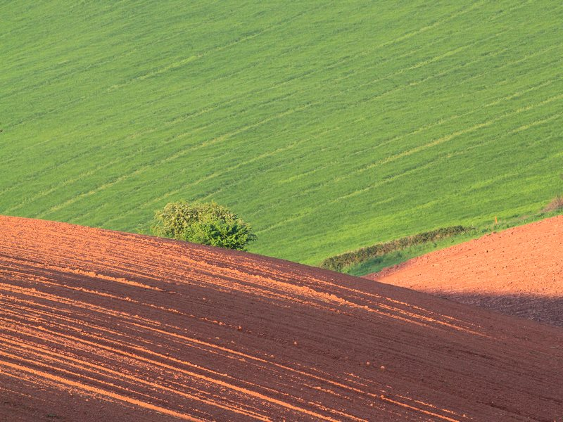 Cross-contour ploughing on the red soils of Devon, making them vulnerable to eosion under heavy rain. Photo: Adrian Midgley via Flickr (CC BY-NC-ND).