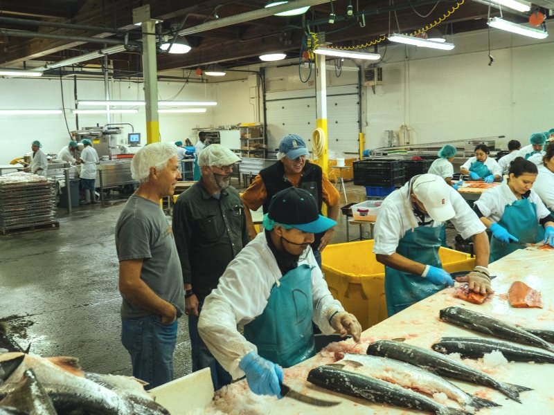 On the salmon processing shift. Photo: Lummi Island Wild.