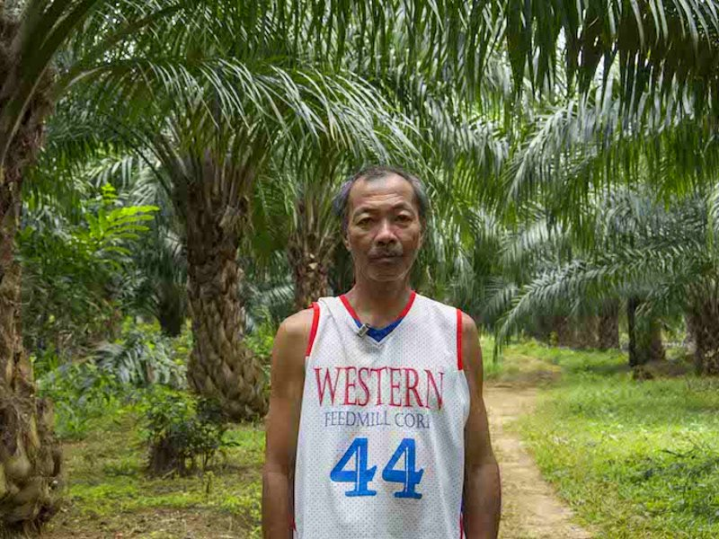 Graciano Muniz stands in a palm oil plantation planted on his land in Aramaywan community, Quezon municipality, Palawan. Photo: Rod Harbinson.