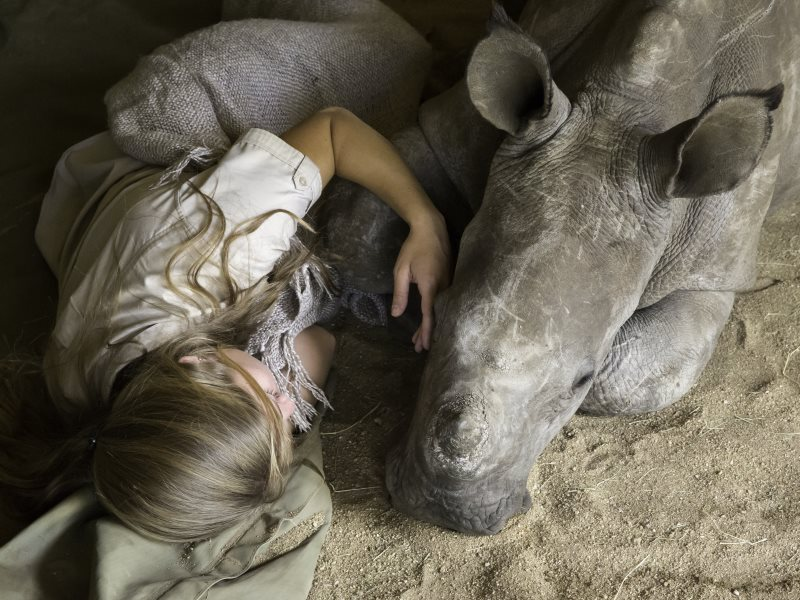 Jade Aldridge of Rhino Revolution has to sleep with Chipoko until he is old enough to join the others. Photo: Rhino Revolution.