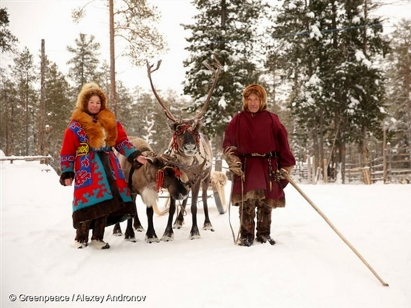 Indigenous couple with reindeer in the Numto Nature Preserve. Photo: Alexey Andronov / Greenpeace.
