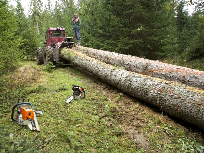 Illegal logging in Harghita County: on illegally restituted land, cutting unmarked trees, no replanting, and extracting a volume of timber a third in excess of that specified in the management plan. Photo: Ecostorm.
