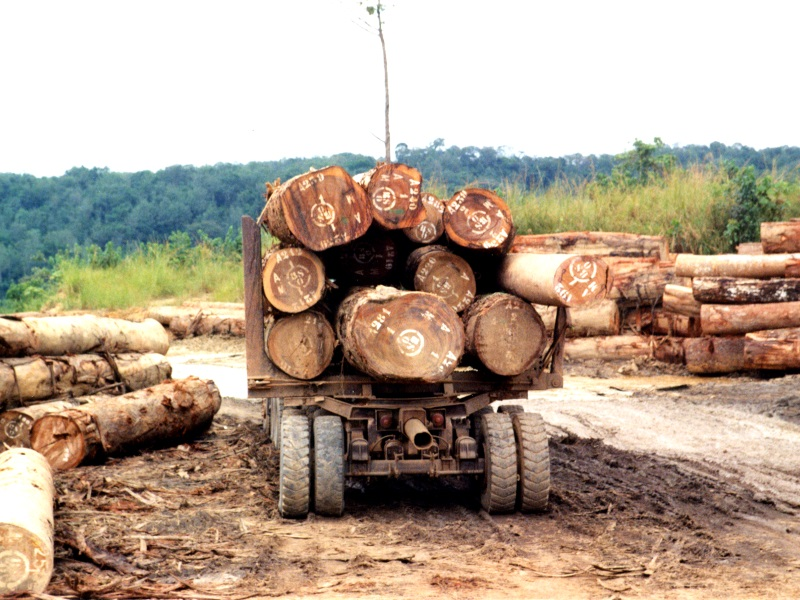 Industrial logging operation in the Congo Basin. Photo: WRI Staff via Wikimedia Commons (CC BY)