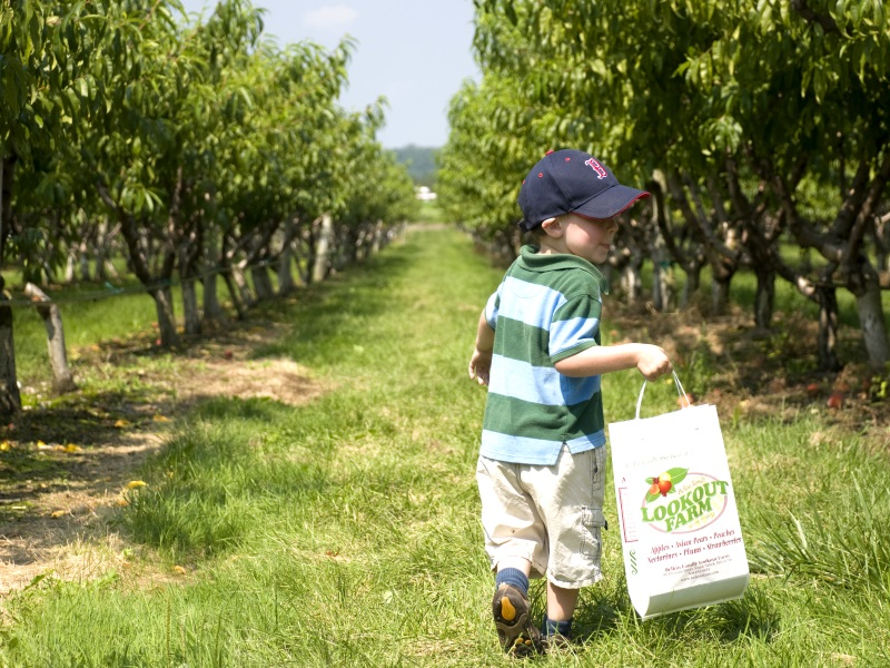 Collecting fruit from an orchard. Photo: C. Holland via Flickr (CC BY-ND)