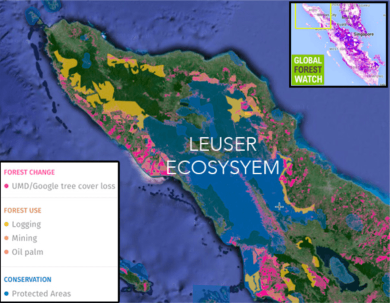 The Leuser ecosystem. Image: Global Forest Watch, Author provided.