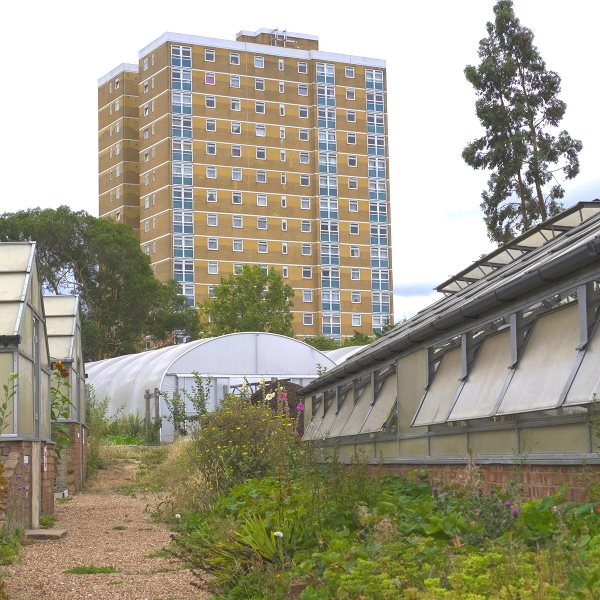 Growing Communities Starter Farm at Dagenham. Photo: Walter Lewis.