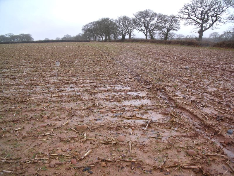 A field after a crop of maize has been taken which shows signs of the soils being capped. Photo: Natural England / Jane Uglow.