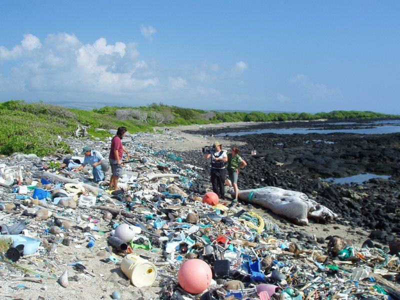 Kamilo Beach Hawaii, buried in highly visible plastic waste. But no less great is the threat from microplastic, too small to be seen by the human eye. Photo: Algalita Marine Research Foundation via Flickr (CC BY-NC-SA).