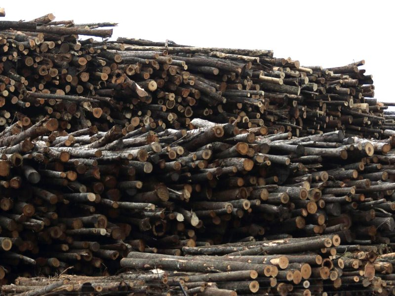 Wood pile at the Ahoskie wood pellet mill, which supplies the UK's Drax power station. Photo: Matt Adam Williams.