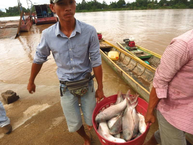 A Sipangdon (4,000 Islands) fisherman brings his catch to sell at Veung Kham market, just inside Laos, July 2016. In the background is the trans-boundary Keong River border which permits Cambodian fishermen to bring their fish to the same market. Photo: T