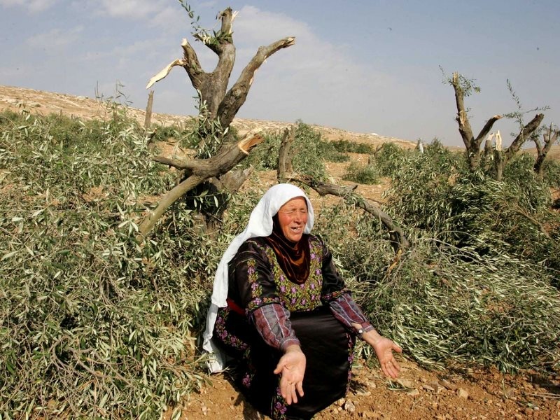 Palestinian woman mourns damage to her family's olive trees at Litwani, 6th January 2006. Photo: Nayef Hashlamou / Shared Interest via Flickr (CC BY).