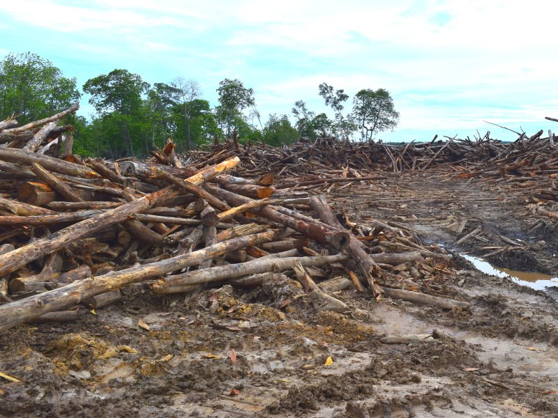 More than 2,000 acres of mangrove forest have already been cleared out without the free, prior and informed consent of the local communities. Photot: Camilla Capasso / FPP.