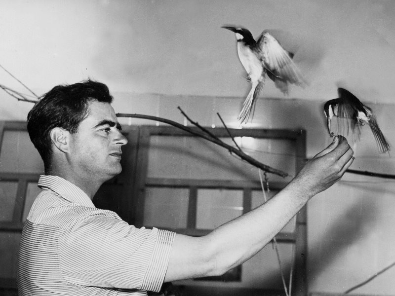 A young Luc Hoffman with birds. Photo: photothèque Tour du Valat.