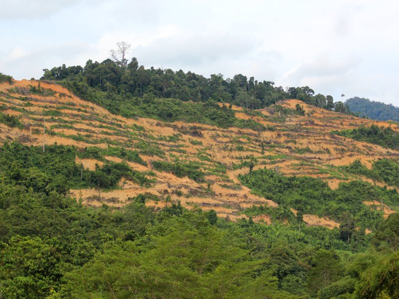 'The hills are bald and bare' - land clearing to make way for oil palm plantations near Bigor village. Photo: Sophie Chao.