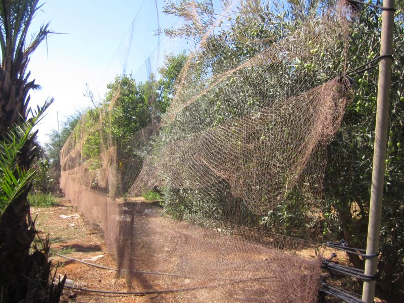 Nets on the British military base in Cyprus. Photo: RSPB / Birdlife Cyprus.