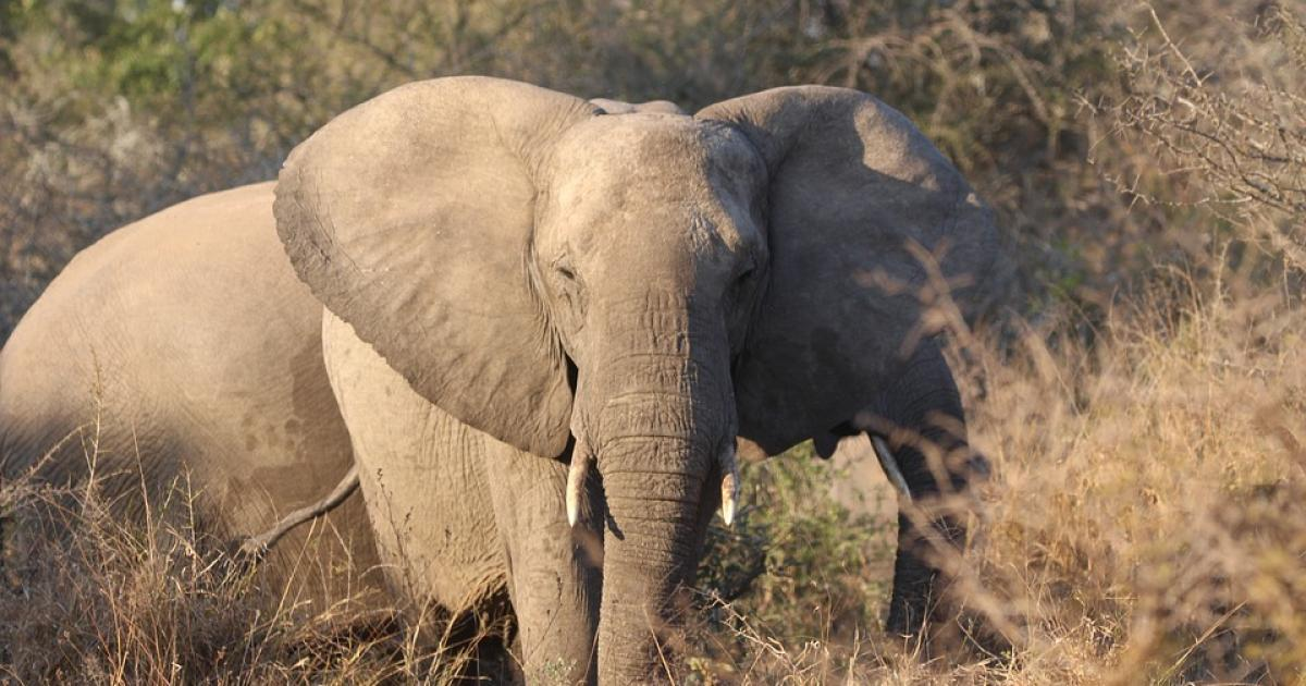 photo image Spotlight on the poaching crisis