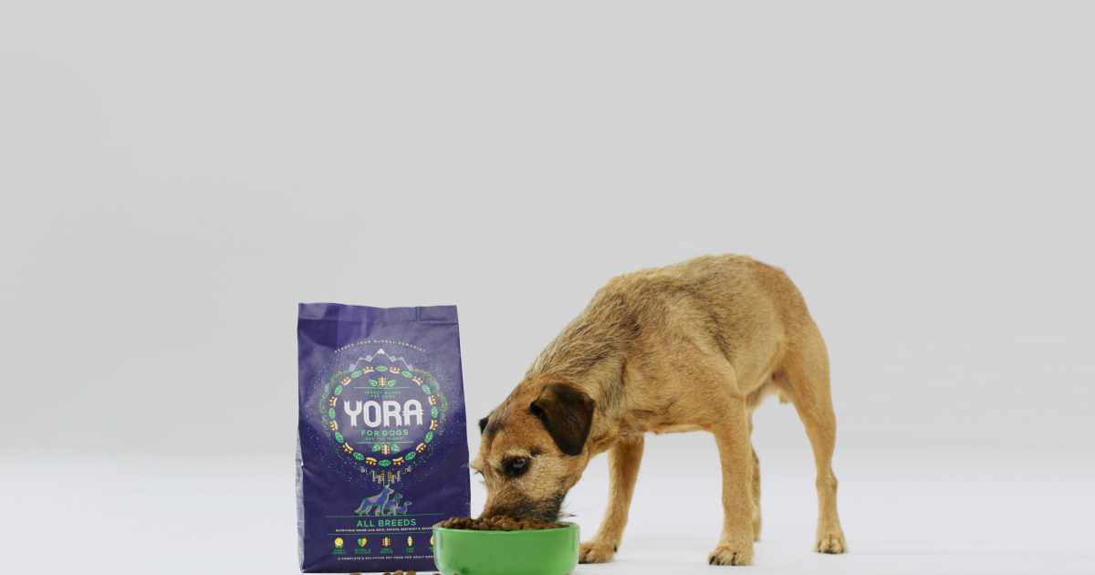 photo image Sustainable pet food – are insects the answer?