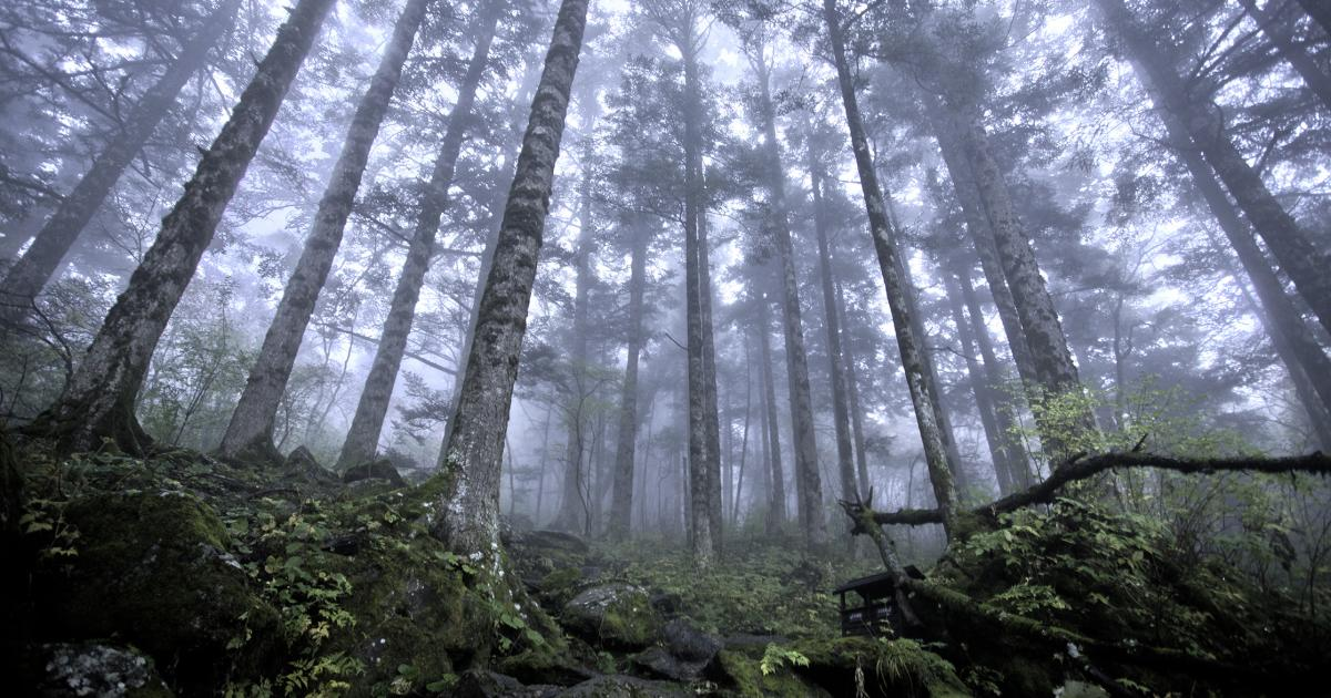 photo of Virtual forest tours for children image