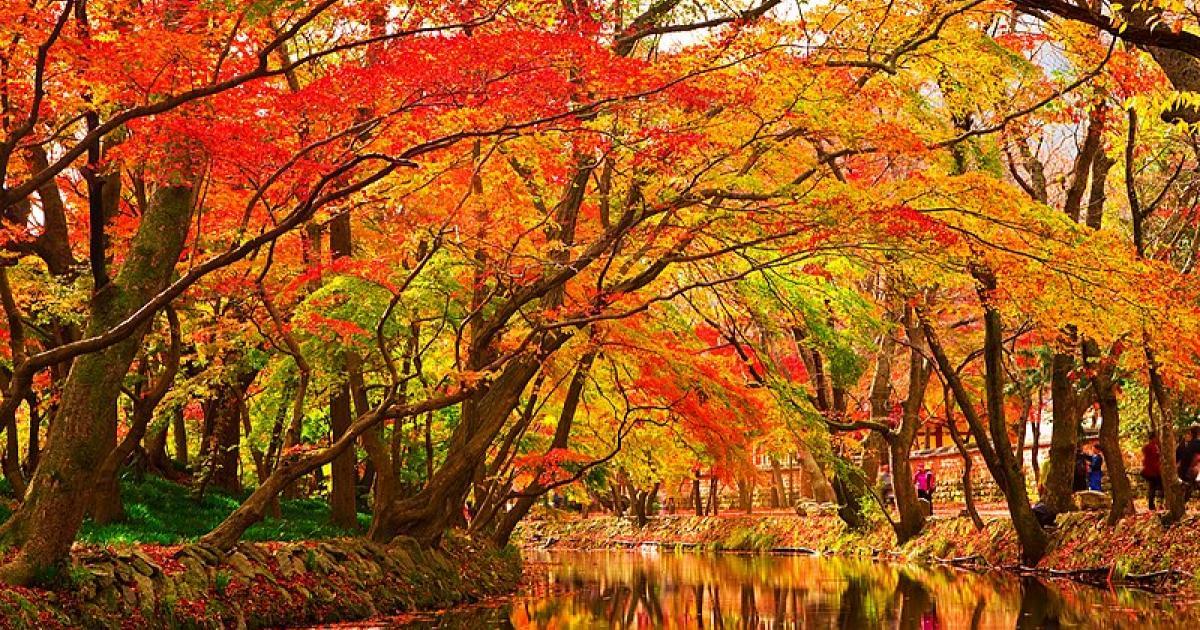 photo of Maple tree species face extinction image