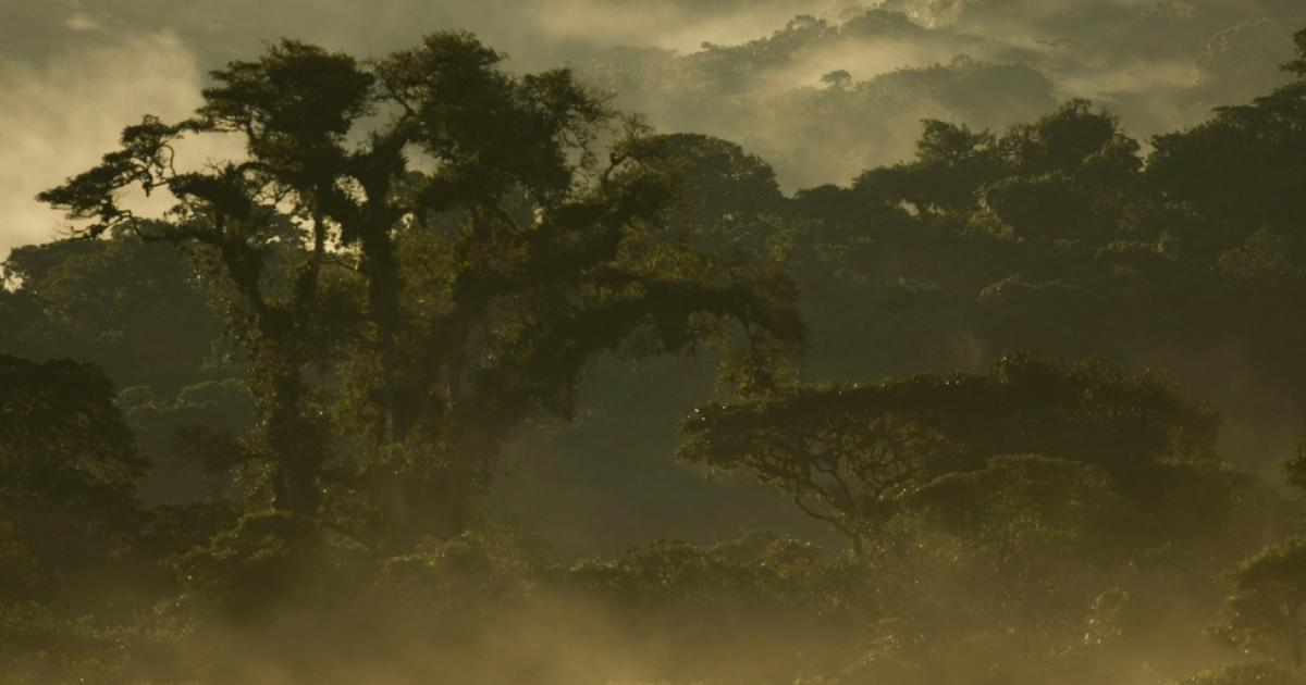 photo of Defending our forests image