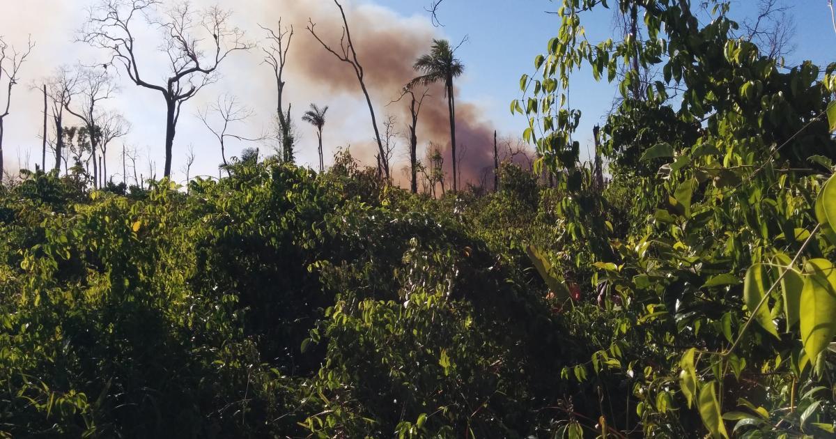 photo of Brazilian Amazon 'releasingcarbon' image