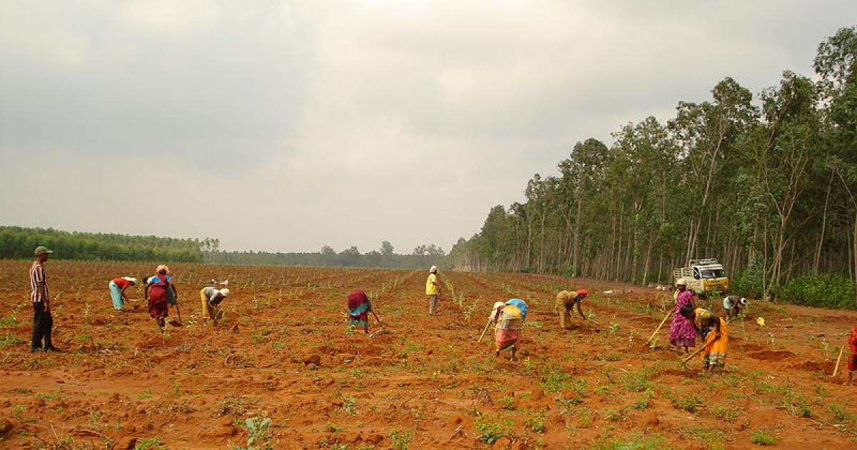FAO: Plantations are not forests!