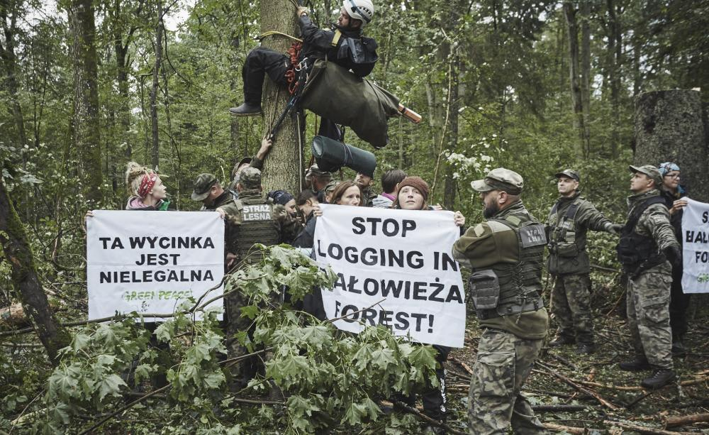 "Campaigners hail ""huge victory"" for forest defenders"
