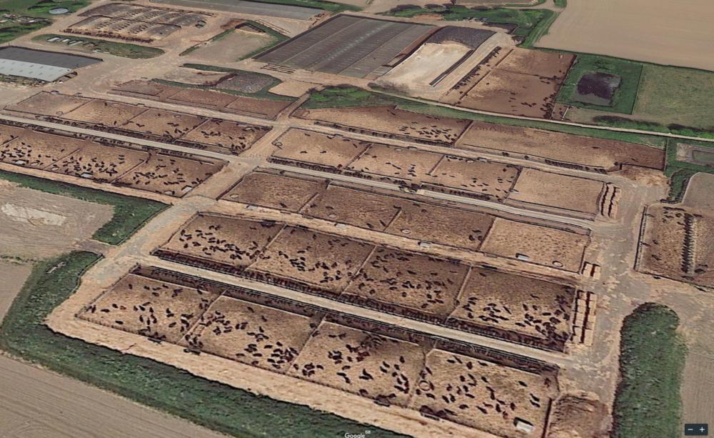 A huge beef farm