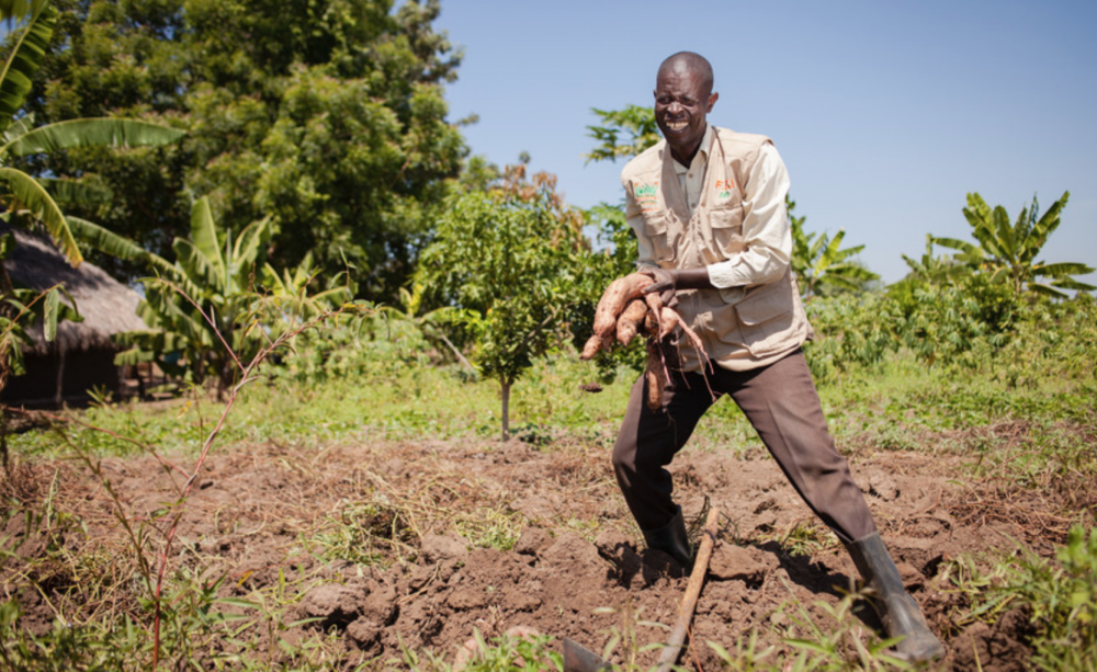 Farm Africa and climate-smart agriculture