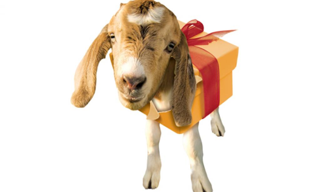 Charity gifting: do festive gifts mean misery for animals?