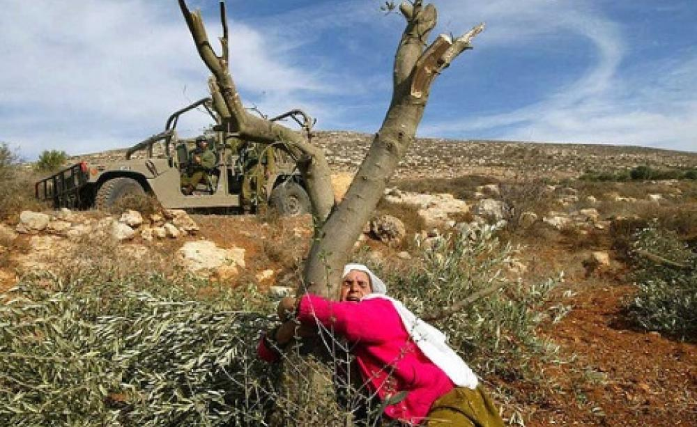 bethlehem   u0026 39 no matter how many olive trees they destroy  will will plant more  u0026 39