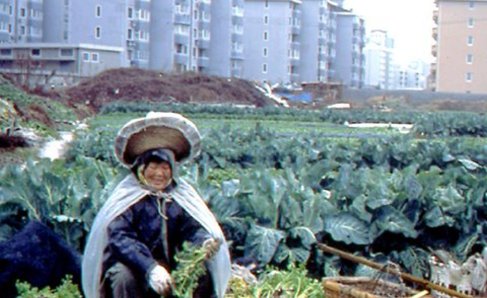 Making cities sustainable with urban agriculture