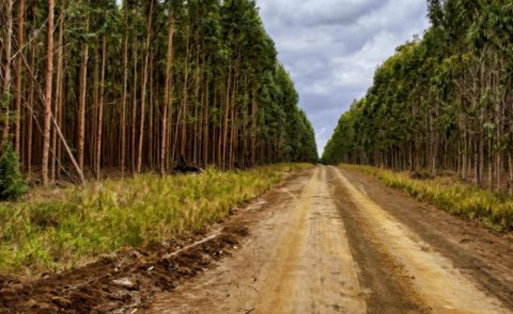 Fao A Plantation Is Not A Forest