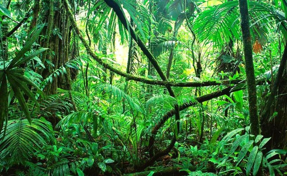 Amazon carbon sink declines as trees grow fast, die faster