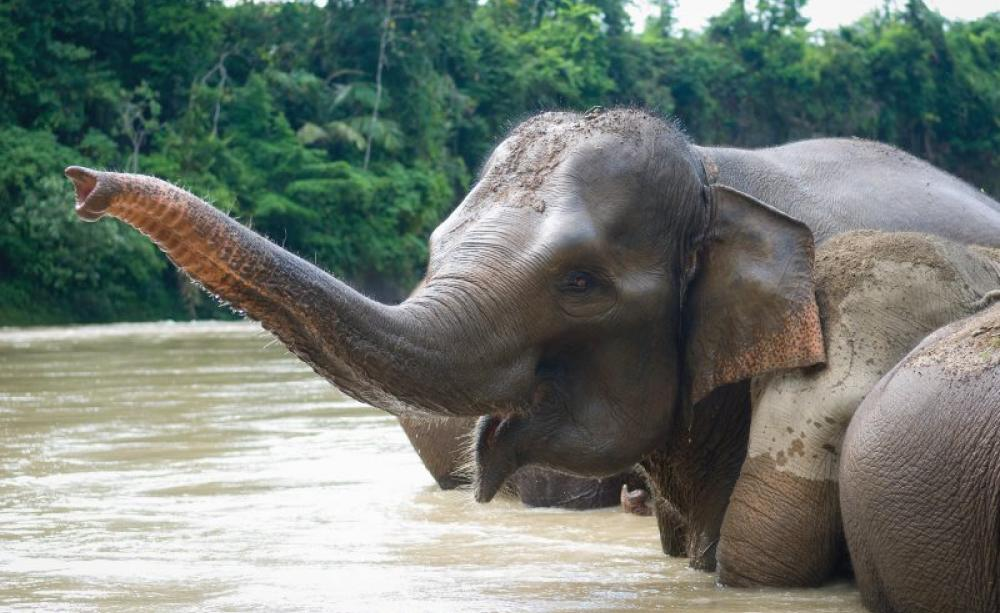 The Oilpalm Connection Is The Sumatran Elephant The Price Of Our
