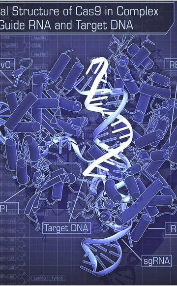 new breeding techniques and synthetic biology genetic engineering by another name